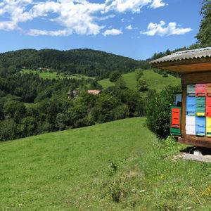 slovenski med 01 fotografiranje na terenu
