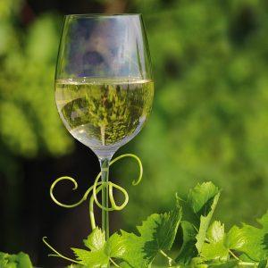 zveza zadrug 07 fotografiranje vina galantes