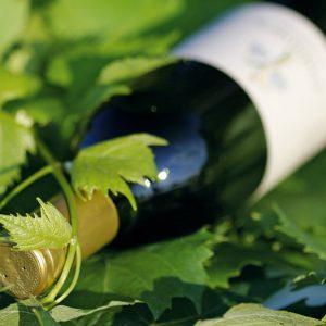 zveza zadrug 08 fotografiranje vina galantes